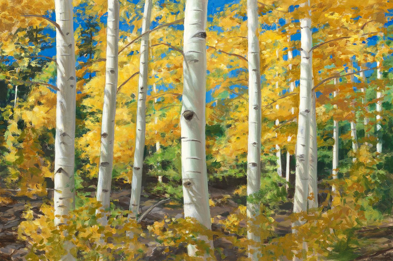 Colorado Aspens By Lynne Adams