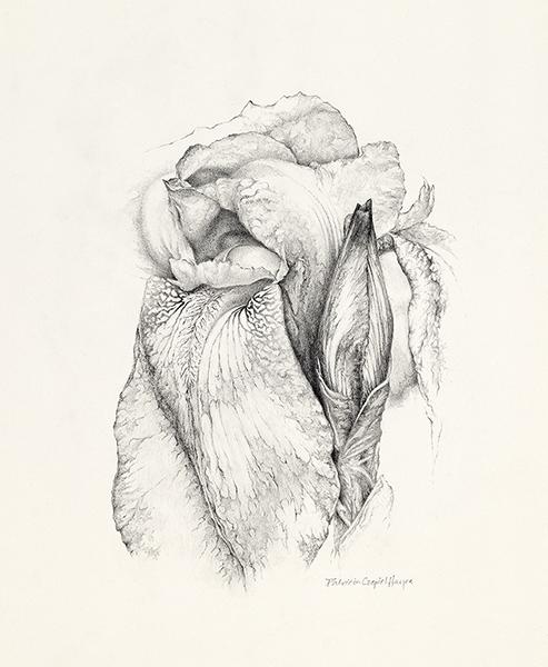 Found Iris – Patricia Czepiel Hayes